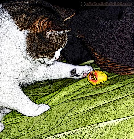 cino-egg1-aafbt