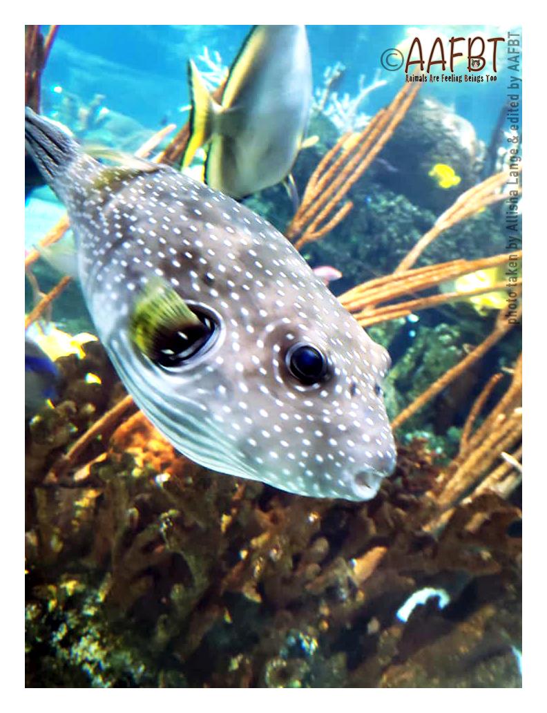 fish-aafbt
