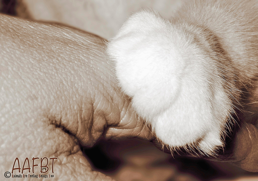 hand-and-paw-tammy-lightened-aafbt