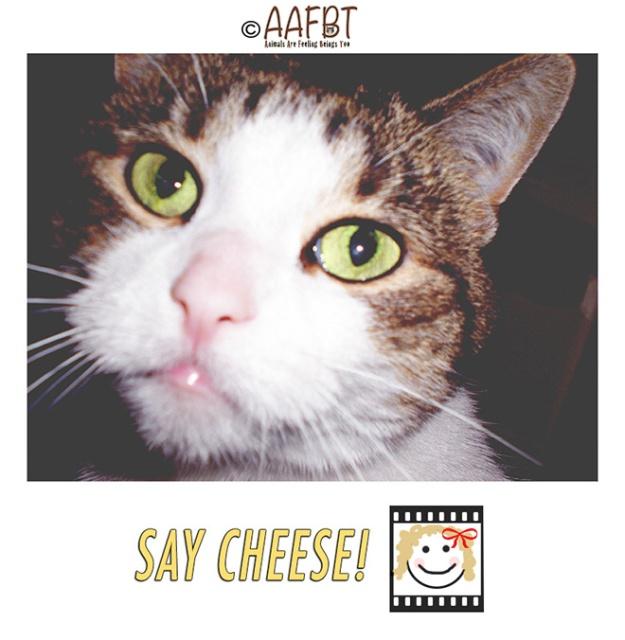 cino-face-camera-aafbt