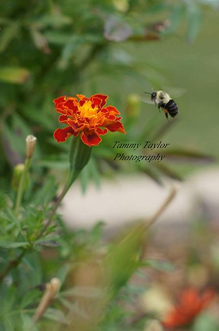 Tammy-bee-watermark2-smaller