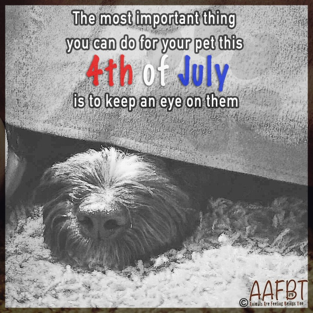 under-cover-4th-of-july-aafbt.jpg