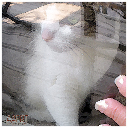 cino-seeing-through-glass-filter-aafbt