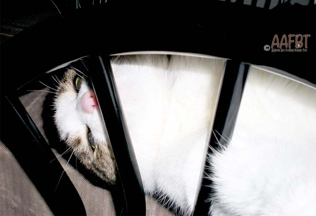 cino-through-kitchen-chair-aafbt
