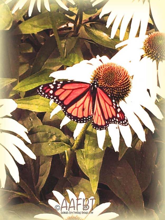 donna-peters-butterfly-edited-aafbt