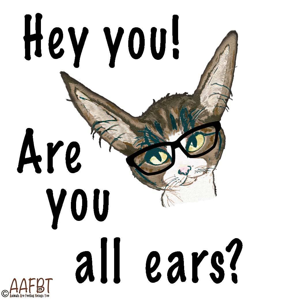 funny-cino-big-ears-aafbt