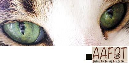cino-eyes-aafbt