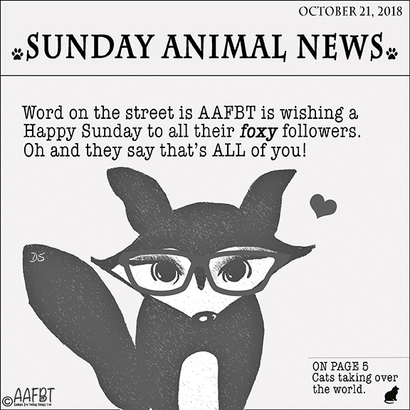 newspaper-happy-sunday-aafbt