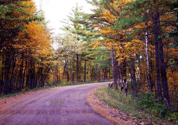 tree-road-aafbt