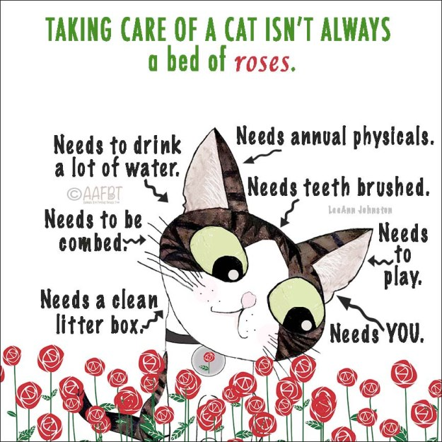 caring-for-cats-aafbt-border