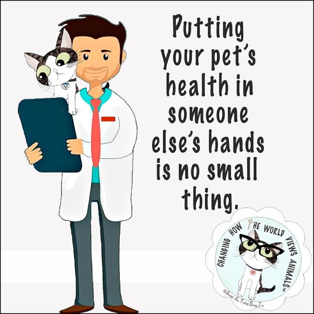 vetrinarian-your-pet-aafbt