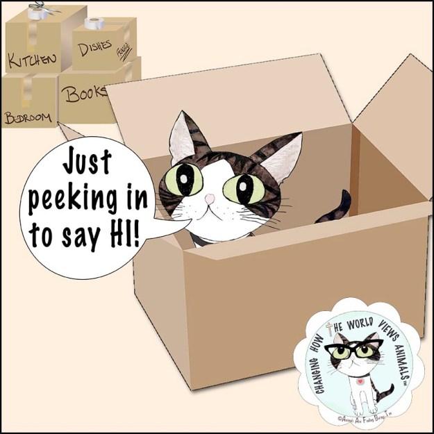 boxes-aafbt