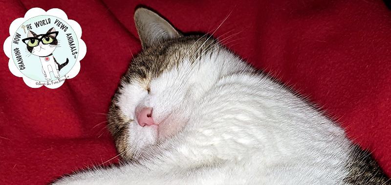 cino-sleeping-redblanket-2019-aafbt