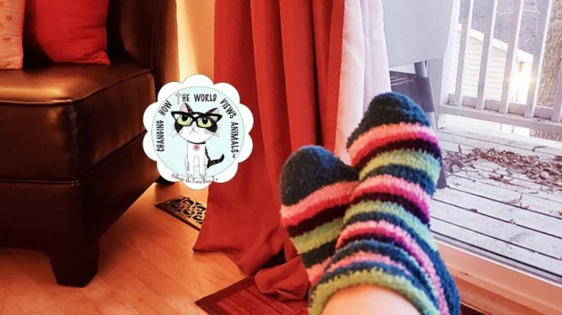 slippers-relaxing