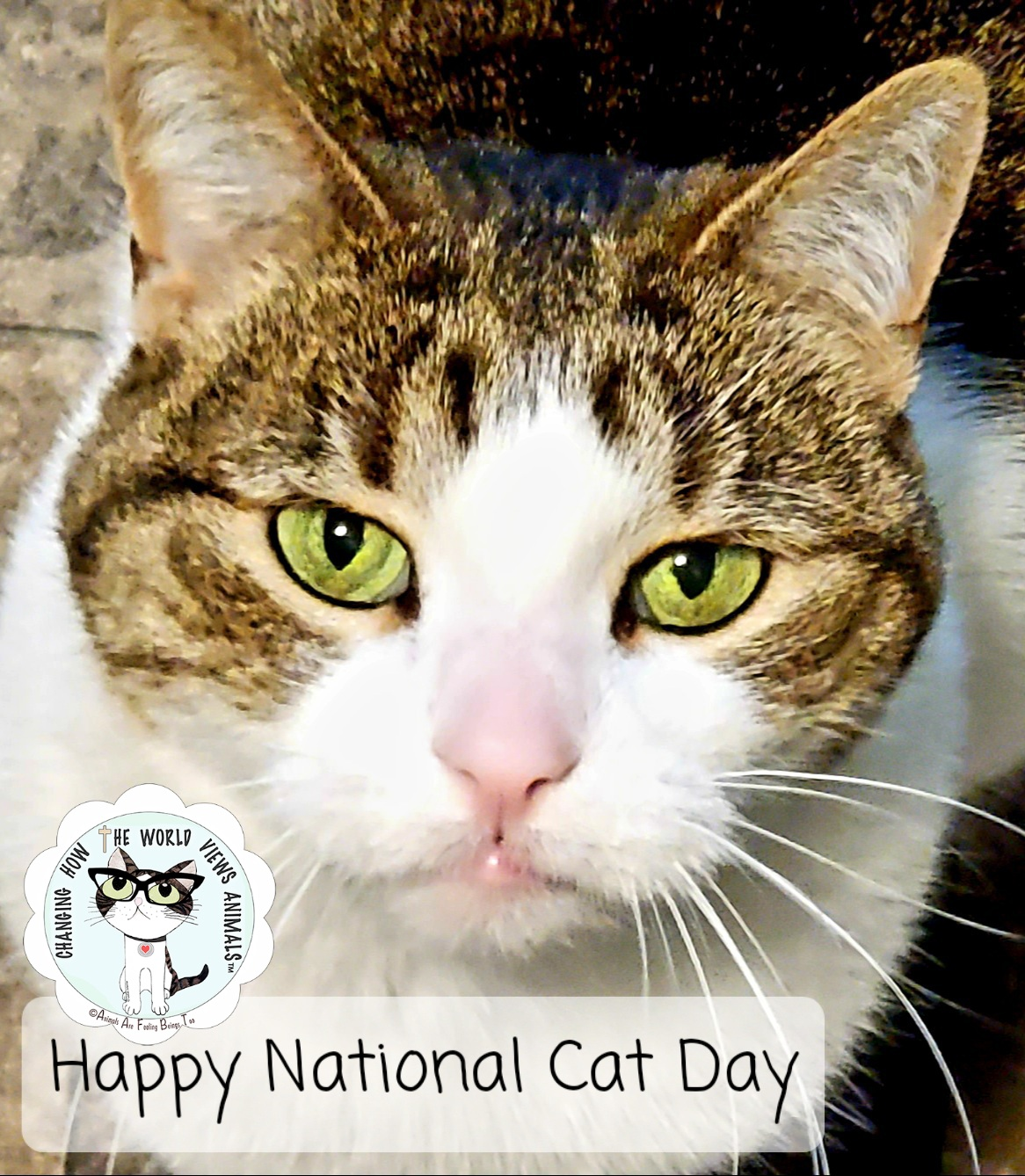 National Cat Day Animals Are Feeling Beings Too